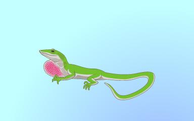 Little Lizard Badge - Quinn's Aquarium