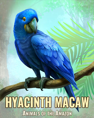 Hyacinth Macaw Badge - Cookie Connect