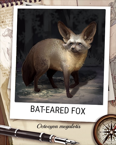 Bat-Eared Fox Nocturnal Animal Badge - Word Whomp HD