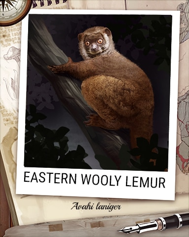 Eastern Wooly Lemur Nocturnal Animal Badge - Anagrams