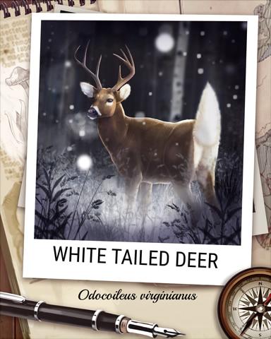 White Tailed Deer Nocturnal Animal Badge - Quinn's Aquarium