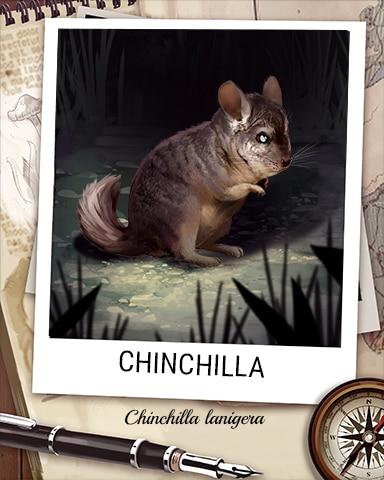 Chincilla Nocturnal Animal Badge - Snowbird Solitaire