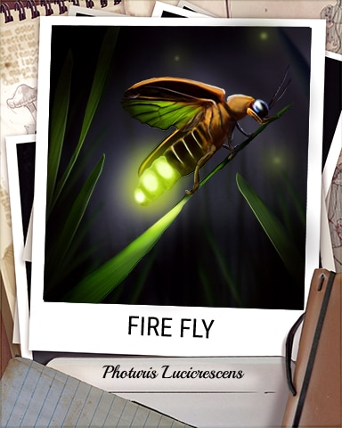 Fire Fly Nocturnal Animal Badge - First Class Solitaire HD