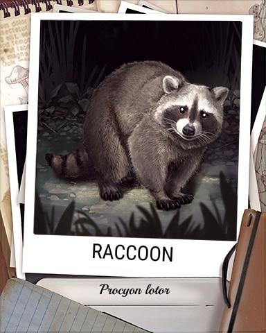 Raccoon Nocturnal Animal Badge - Pogo Daily Sudoku