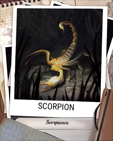 Scorpion Nocturnal Animal Badge - Sweet Tooth Town