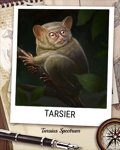 Tarsier Nocturnal Animal Badge - World Class Solitaire HD