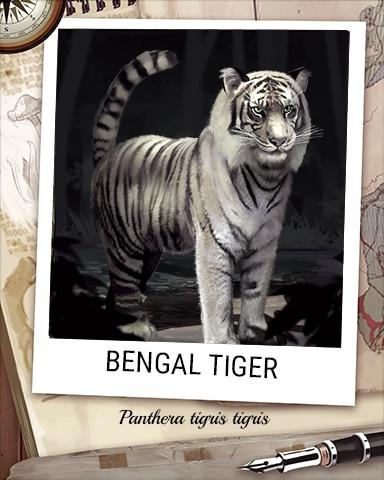 Bengal Tiger Nocturnal Animal Badge - Bejeweled Stars