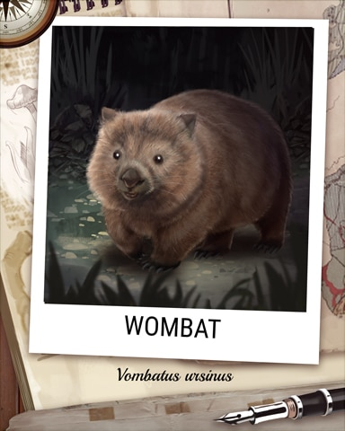 Wombat Nocturnal Animal Badge - StoryQuest