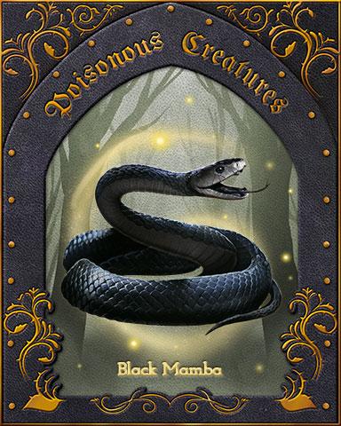 Black Mamba Poisonous Creatures Badge - Word Whomp HD