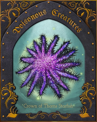 Crown Of Thorns Starfish Poisonous Creatures Badge - First Class Solitaire HD