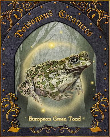 European Green Toad Poisonous Creatures Badge - Quinn's Aquarium