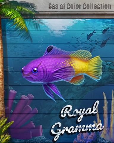 Royal Gramma Sea Of Color Badge - Canasta HD