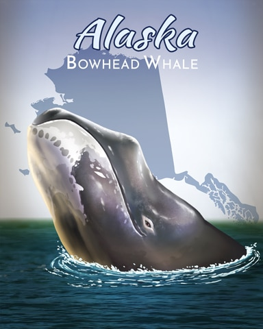 Bowhead Whale Wild America Badge - Claire Hart: Secret In The Shadows