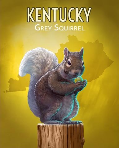 Grey Squirrel Wild America Badge - Dice City Roller HD
