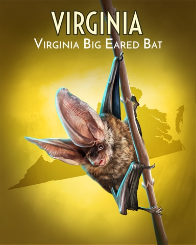Virginia Big-Eared Bat Wild America Badge - Pogo™ Slots
