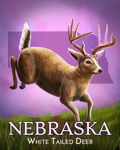 Nebraska White-Tailed Deer Wild America Badge - Spades HD