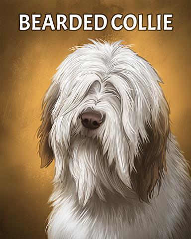 Bearded Collie Badge - Lottso! Express HD