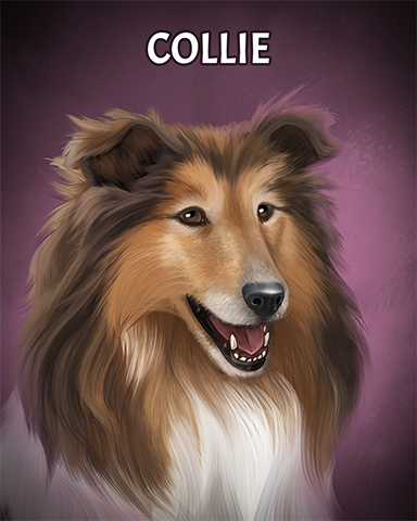 Collie Badge - Aces Up! HD