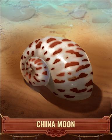 China Moon Shell Badge - Quinn's Aquarium