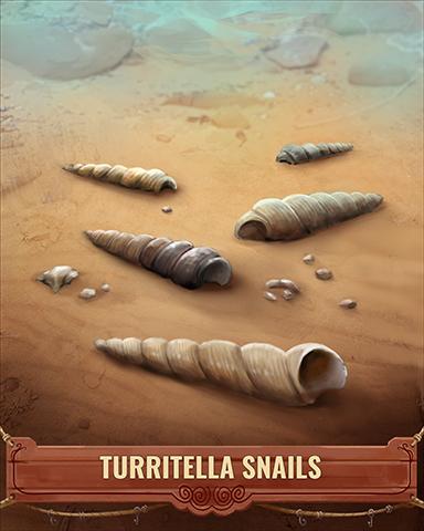 Turritella Snails Shell Badge - Tumble Bees HD
