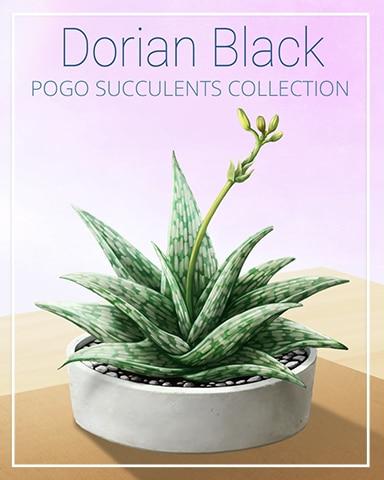 Dorian Black Succulent Badge - Canasta HD