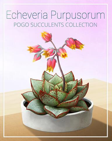 Echeveria Purpusorum Succulent Badge - Payday Freecell HD
