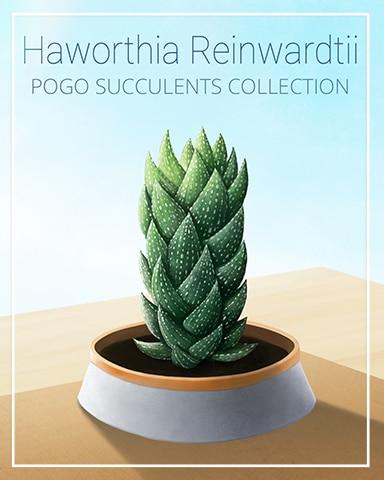 Haworthia Reinwardtii Succulent Badge - Jungle Gin HD