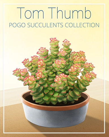 Tom Thumb Succulent Badge - Rainy Day Spider Solitaire HD