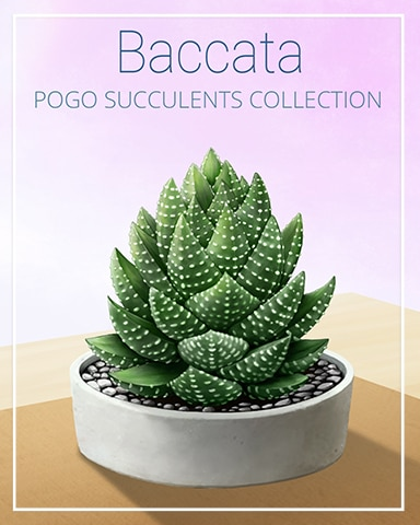 Baccata Succulent Badge - World Class Solitaire HD
