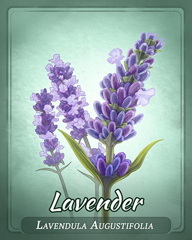 Lavender Badge - Pogo™ Bowl