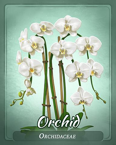 Orchid Badge - Bingo Luau