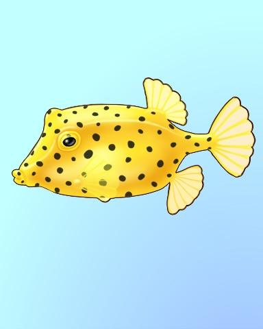 The Box Rocks Badge - Quinn's Aquarium
