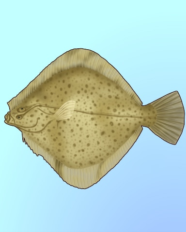 Flat Flounder Badge - Quinn's Aquarium