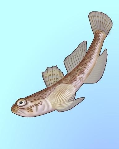 Good Goby Badge - Quinn's Aquarium