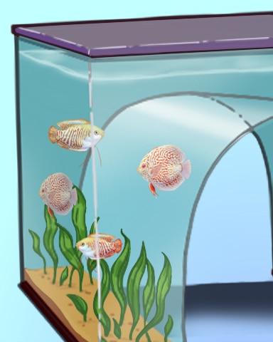 Full House Badge - Quinn's Aquarium