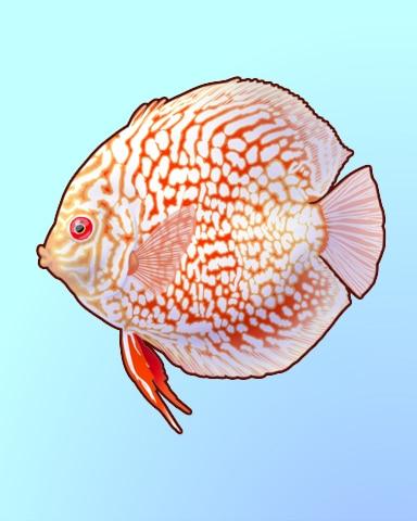 Don't Throw This Discus Badge - Quinn's Aquarium
